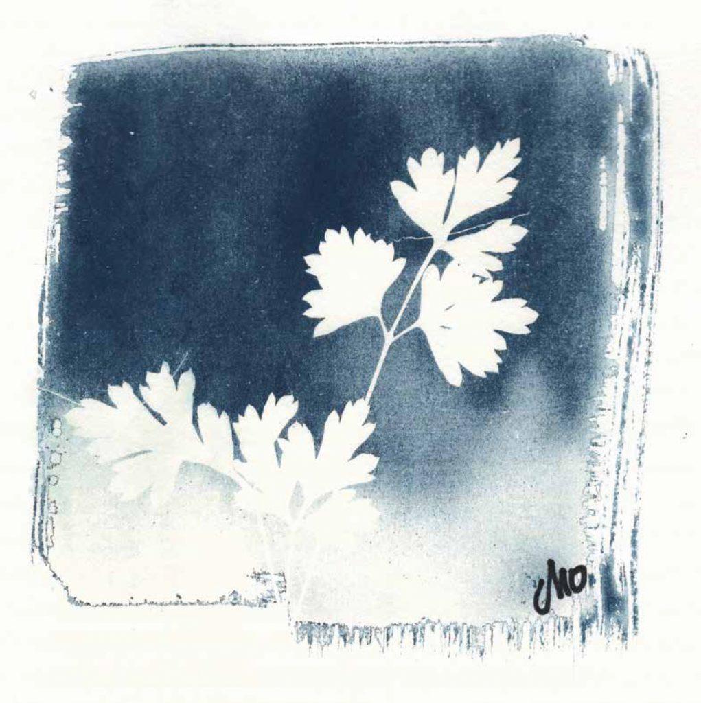Cyanotype 001_Cho Artvisuel